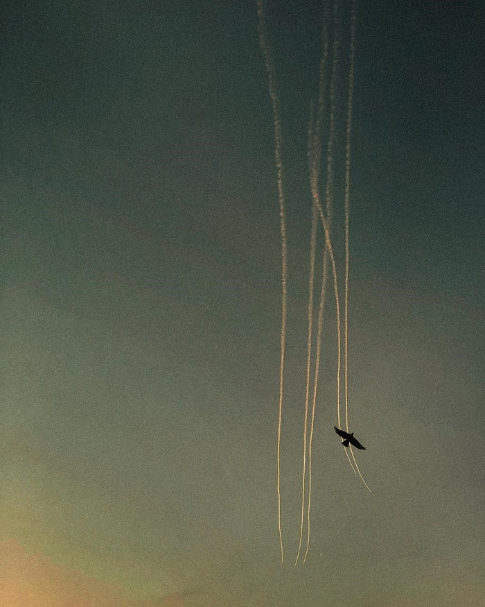 contrails and bird flying