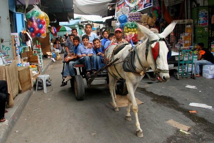 donkey cart with child passengers